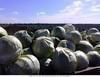Овощи оптом 2013 г.