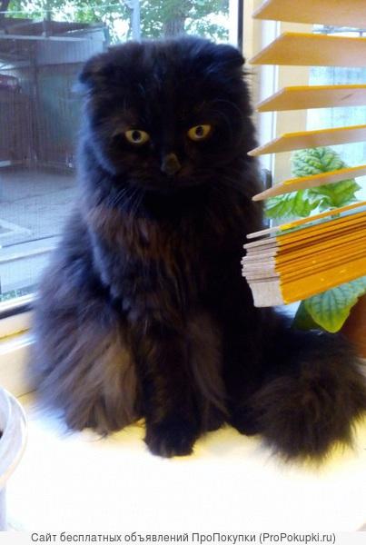 Черная-черная пятница и черные-черные коты