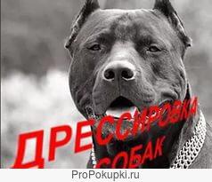 Индивидуальная дрессировка собак всех пород