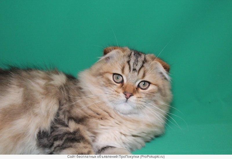 Продаются чудесные подрощенные котики