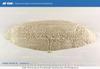 Микрокальцит, микромрамор от завода-производителя URALZSM