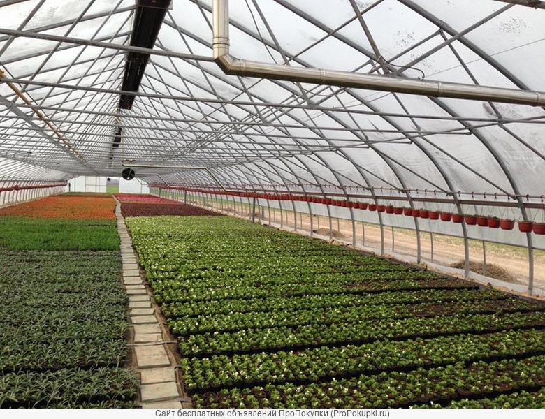 Промышленная/фермерская теплица Oriente RUS