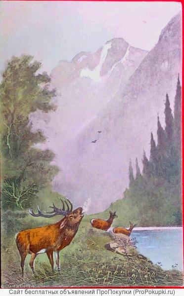Редкая открытка
