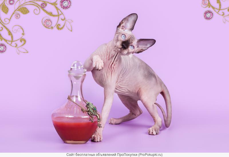 В этом месяце небывалая продажа котят от 5000 рублей!