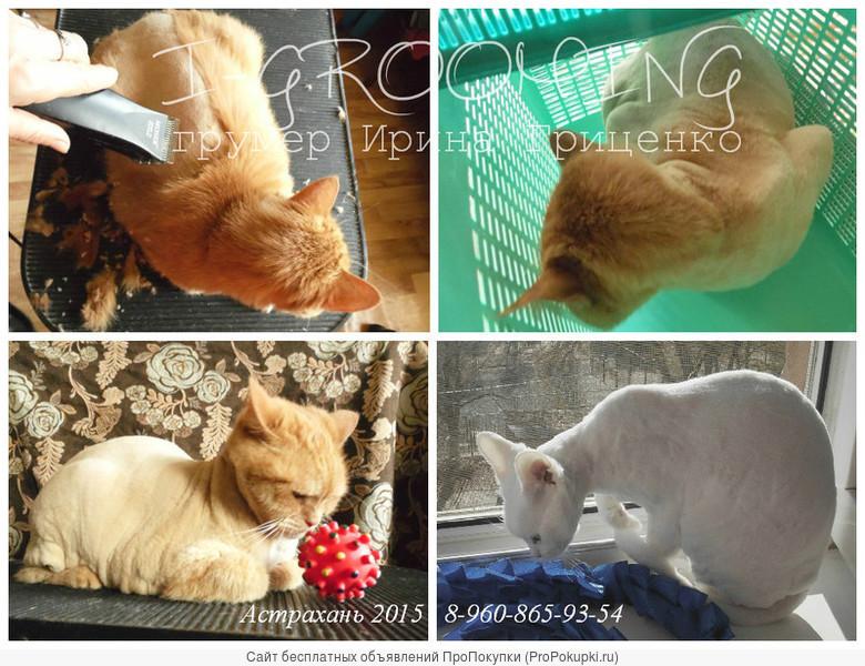 Стрижки котов и кошек в Астрахани. Опытный грумер