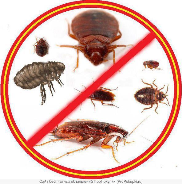 Уничтожение тараканов, клопов, блох и др