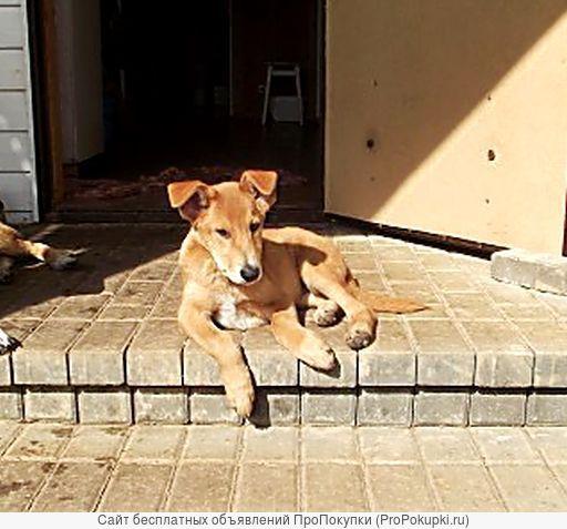 Молоденький щенок Гаврик в дар