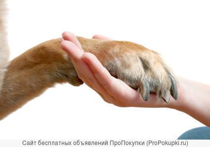 Предлагаю услуги маникюра для собак - Груминга