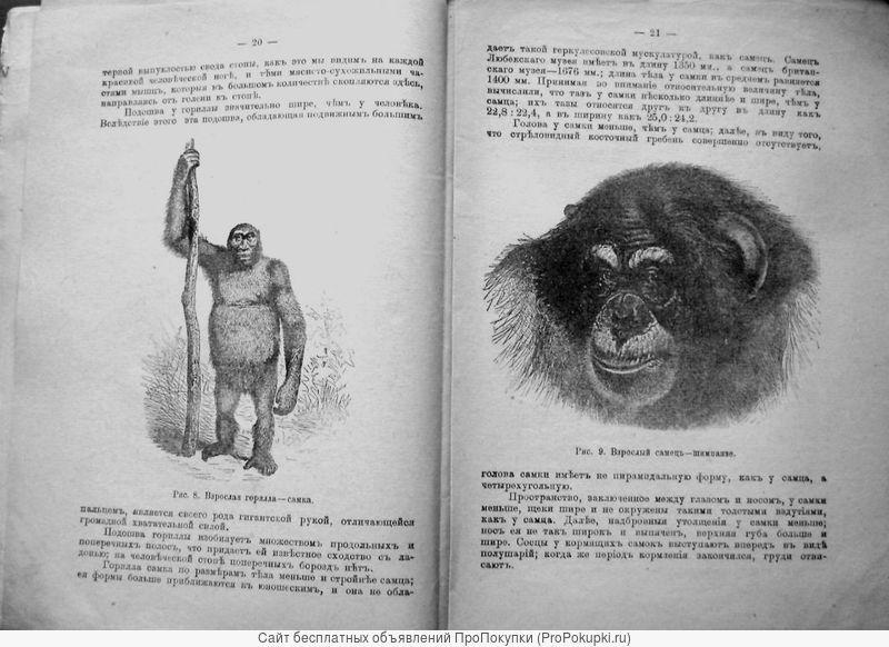 Раритет. «Физические различия человеческих рас» 1902 год
