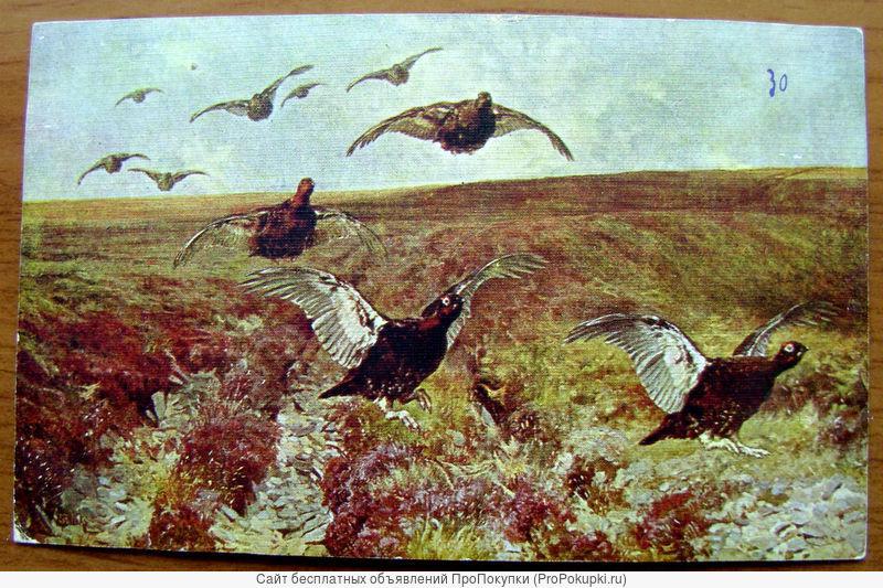 Охота. «Шотландские граусы». 1900 год