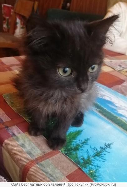 отдам в хорошие руки маленького котеночка