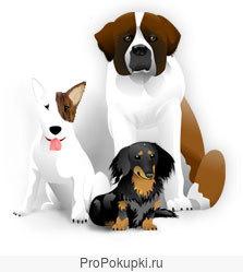 Дрессировка собаки у эксперта