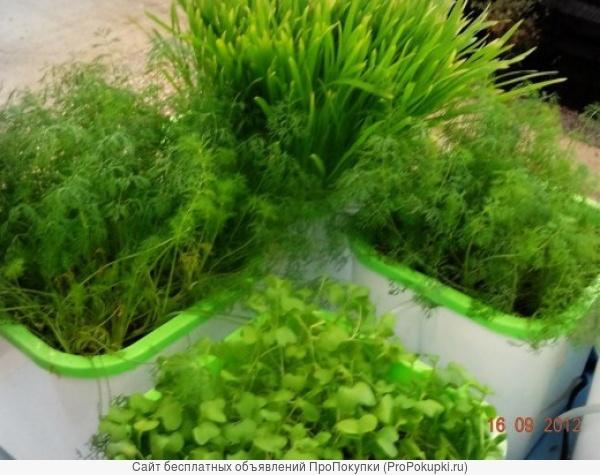 проращиватель зерен и семян