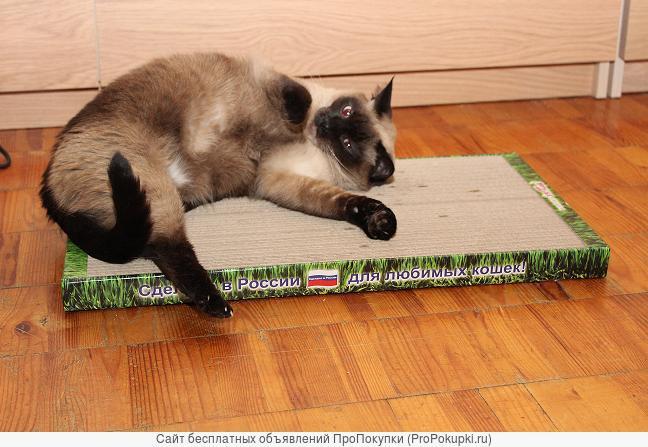 Новое поколение когтеточек-лежанок для кошек в Петрозаводске.