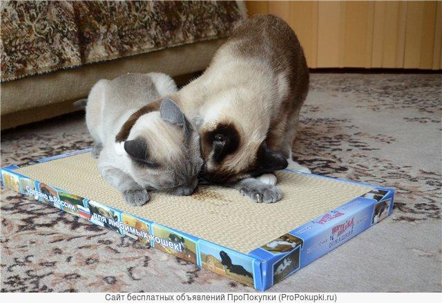 Новое поколение когтеточек-лежанок для кошек в Хабаровске.