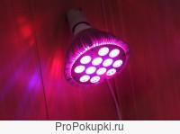 Лампы и светильники для растений ДНаЗ, LED, индукция