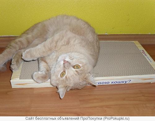 Новое поколение когтеточек для кошек.