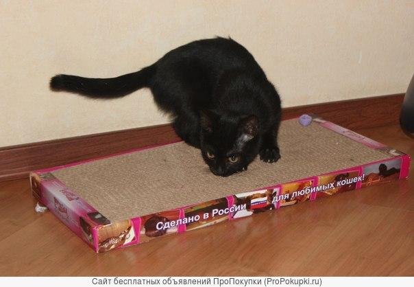 Новое поколение когтеточек-лежанок для кошек.