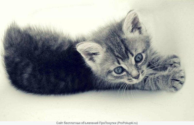Шикарные котята, плоды любви