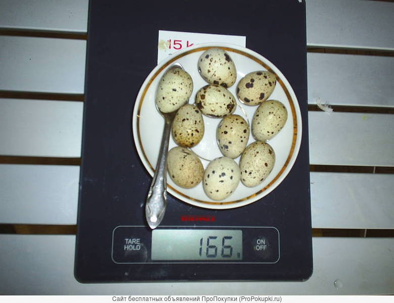 Яйцо инкубационное мясных перепелов