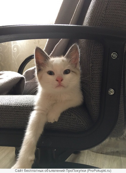Отдам шикарного котенка