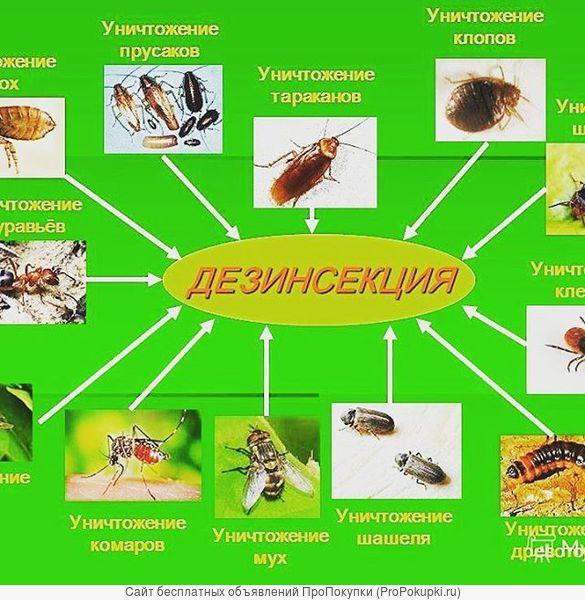 комаров тараканов поморить в Самаре.Дезинсекция насекомых