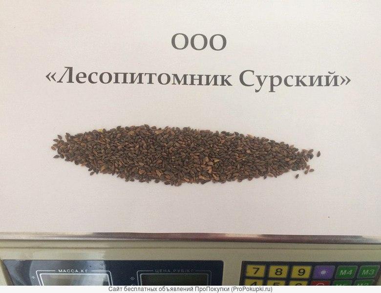 Отправим почтой кондиционные семена Ели Европейской
